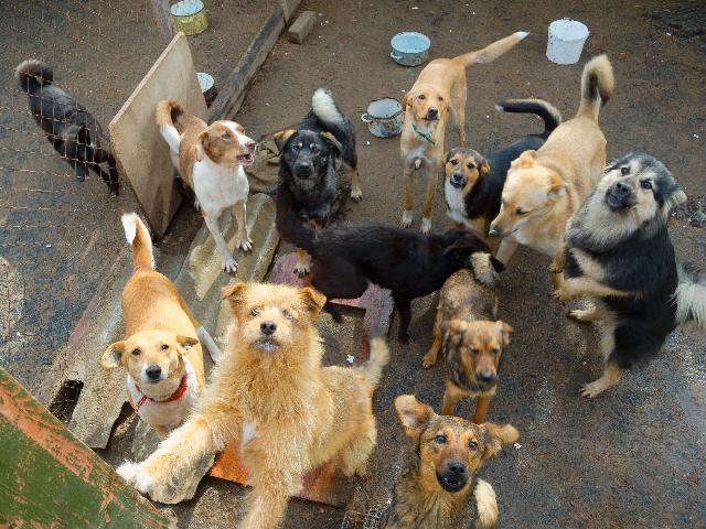 Cães e gatos são resgatados de pet shop abandonada