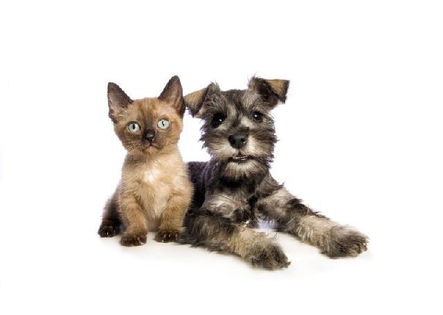 Projeto visa liberar cães e gatos pequenos no transporte público