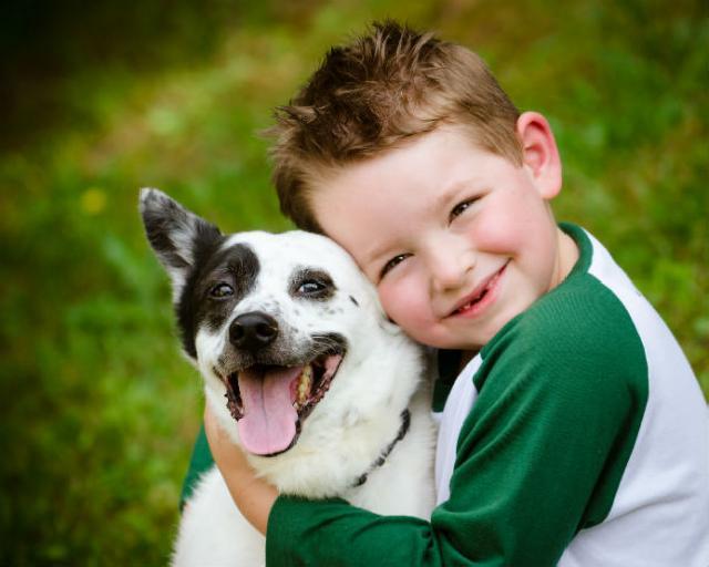 Estudo avalia se cachorros realmente se parecem com seus donos