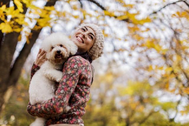 Cães preferem carinhos a elogios, aponta estudo