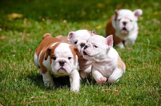 Cães de Raça - Nomes para Cachorros Fêmeas