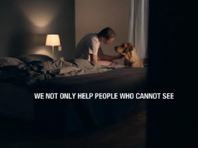 Cães ajudam humanos a superar traumas psicológicos