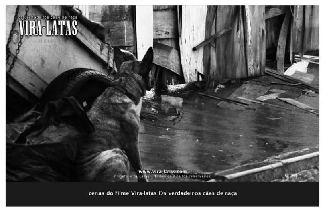 Documentário Vira-Latas