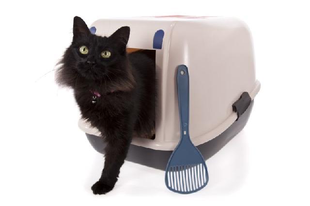 caixa-areia-felinos-limpar