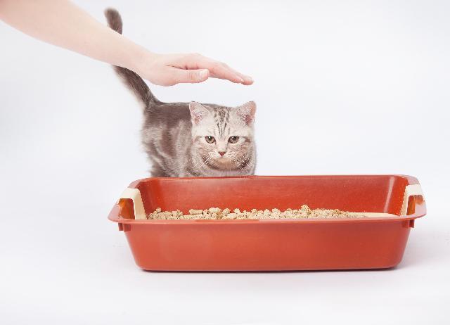 Caixa de Areia para Gatos
