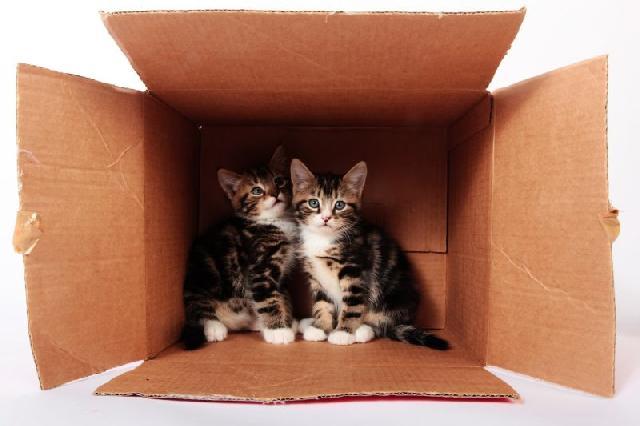 caixa-maternidade-felinos