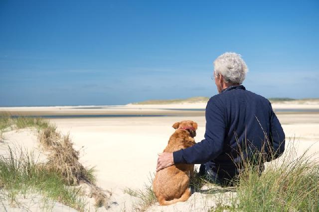 Cães podem ajudar diabéticos em crise
