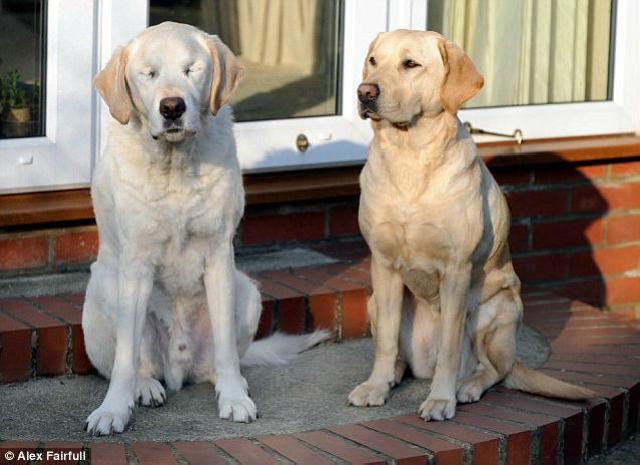 O cão-guia Edward e a cadela-guia Opal