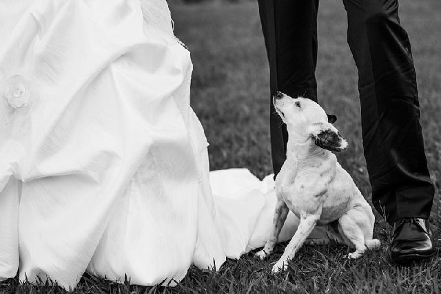 Cães em casamentos