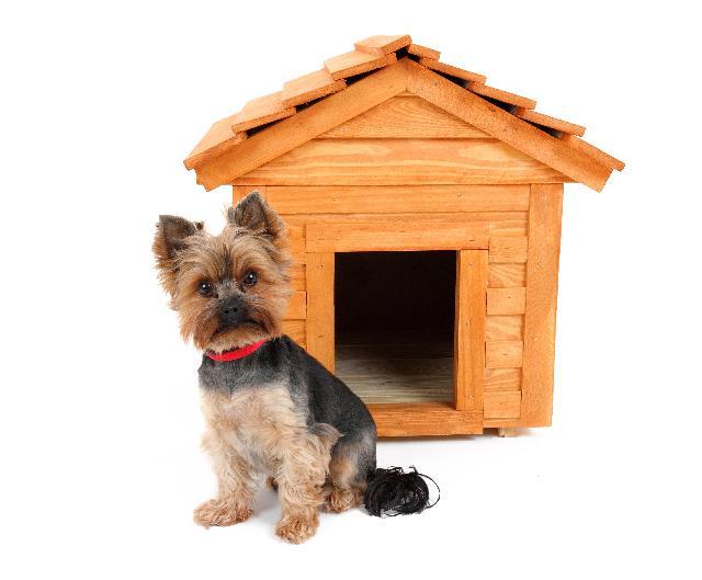 Casas para Cachorros Grandes e Pequenos