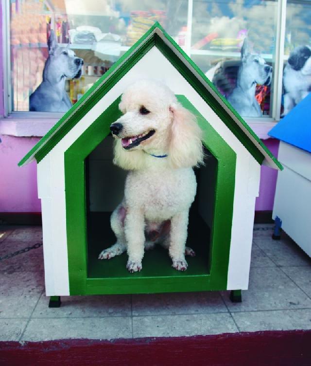 casinha-cachorro-branca-verde