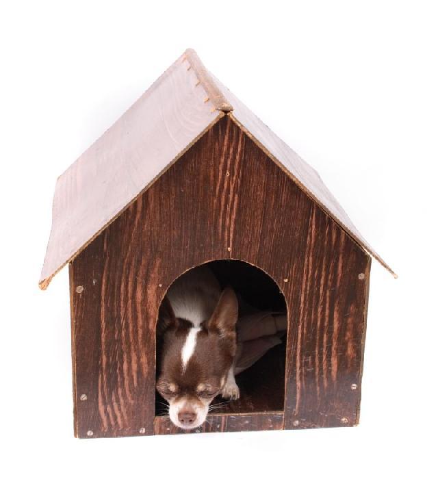 casinha-cachorro-pequeno