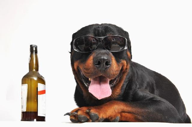 cerveja-para-cachorro