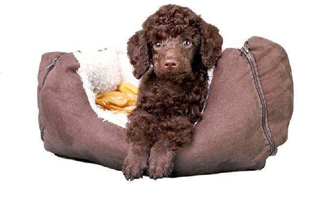 caminha de cachorro