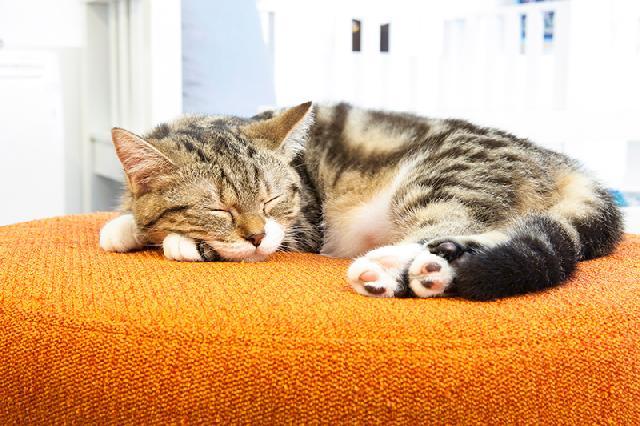 colchão para gatos