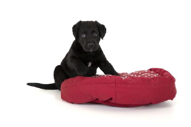 Colchonetes para Cães