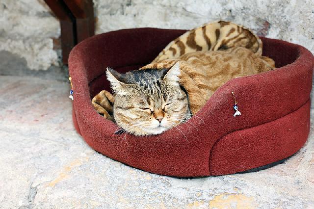 colchonetes para gatos