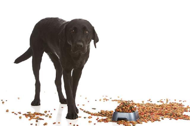 Comidinhas para Cães