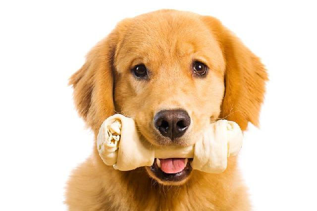 como-escovar-dentes-cachorros