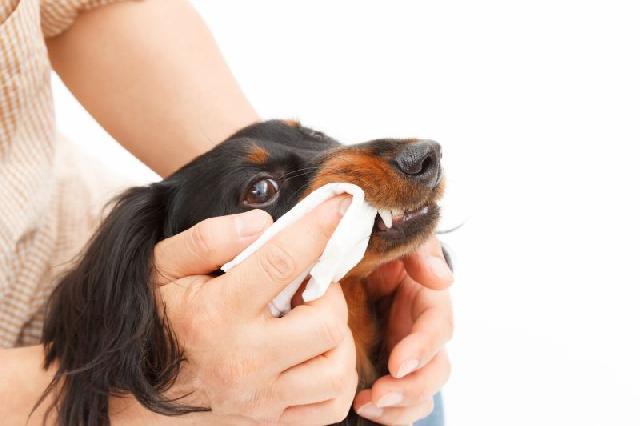 como-escovar-dentes-caes