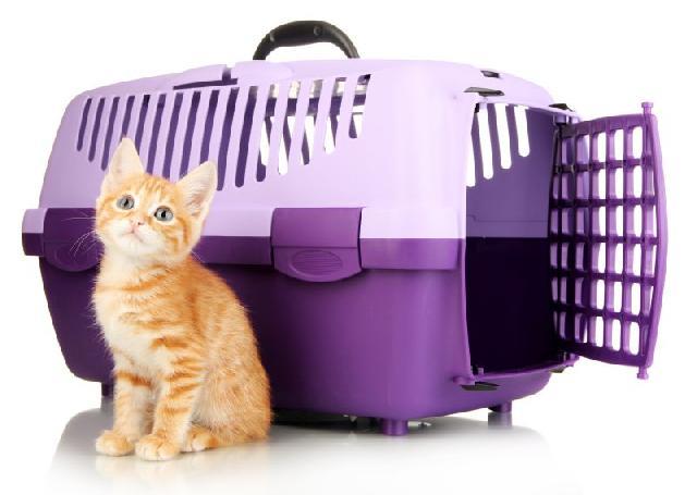 como-fazer-viagem-com-gato