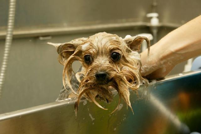 como-montar-banho-tosa