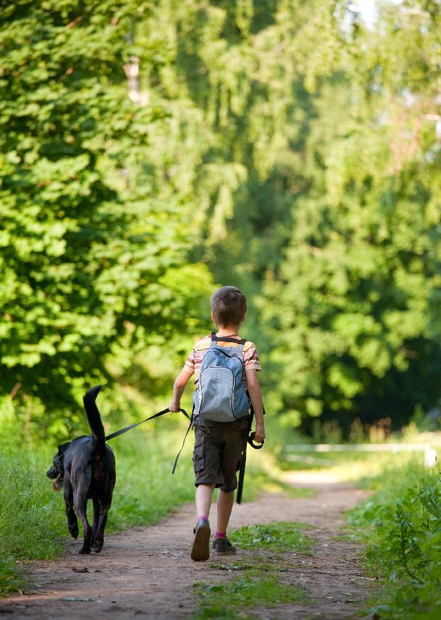 Como passear com cachorro