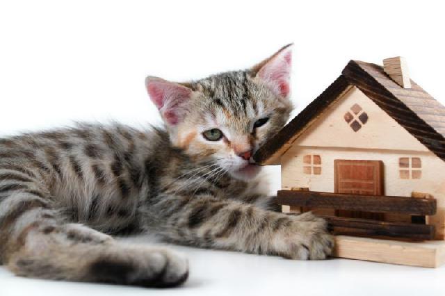comprar-gato