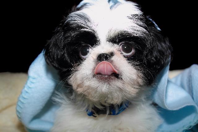 Cropofagia - Meu cachorro come cocô