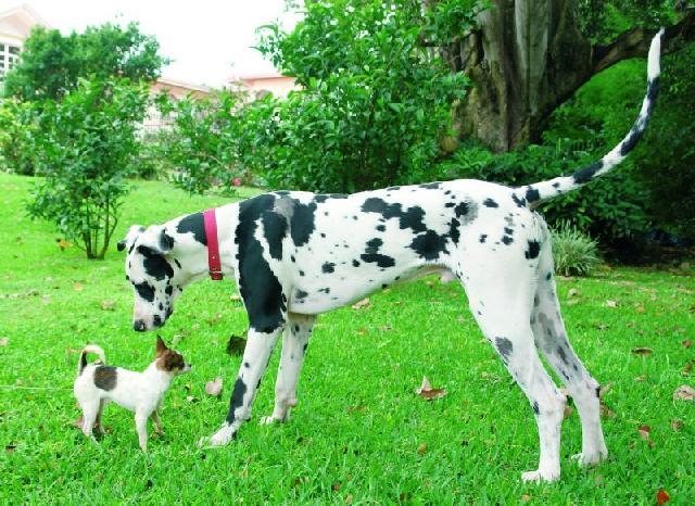 Cores de Cães
