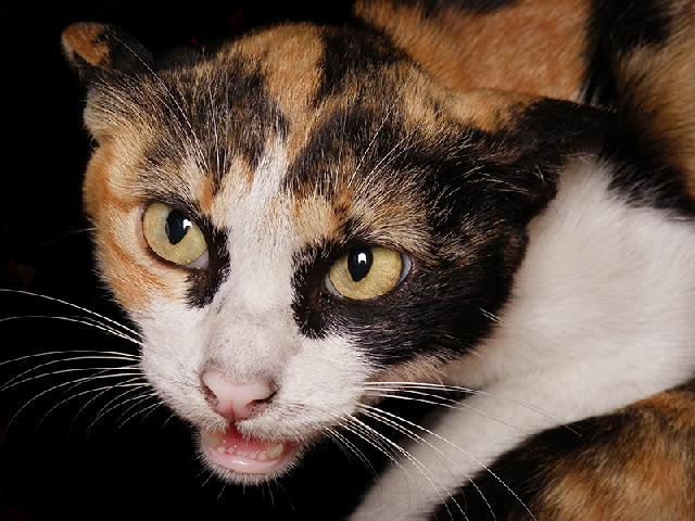 cores de gatos