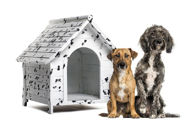 casinha de cães