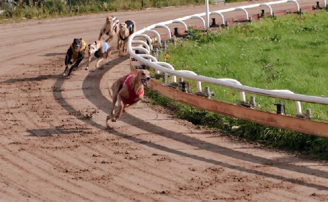 corridas-cachorro