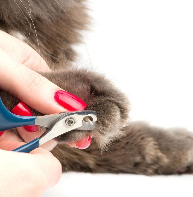 cortar-unhas-gatos