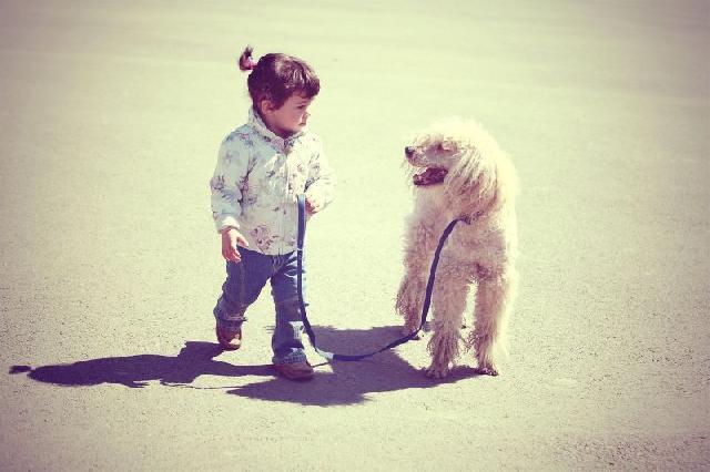 Cães são os preferidos das crianças