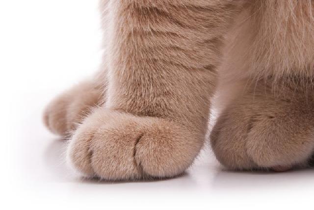 cuidar-gato