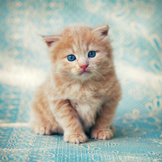 Curiosidades sobre o mundo dos felinos