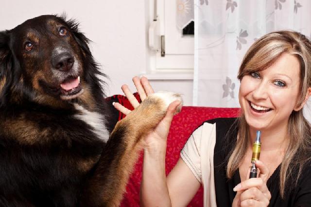 dar-remedio-para-cachorros