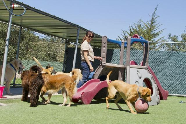 day-care-para-animais
