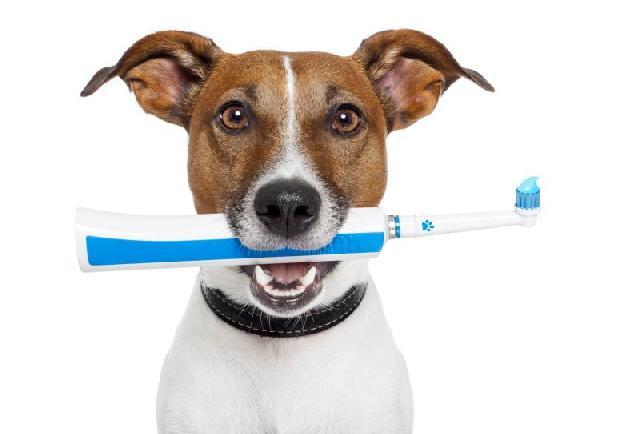 dentista-cachorros