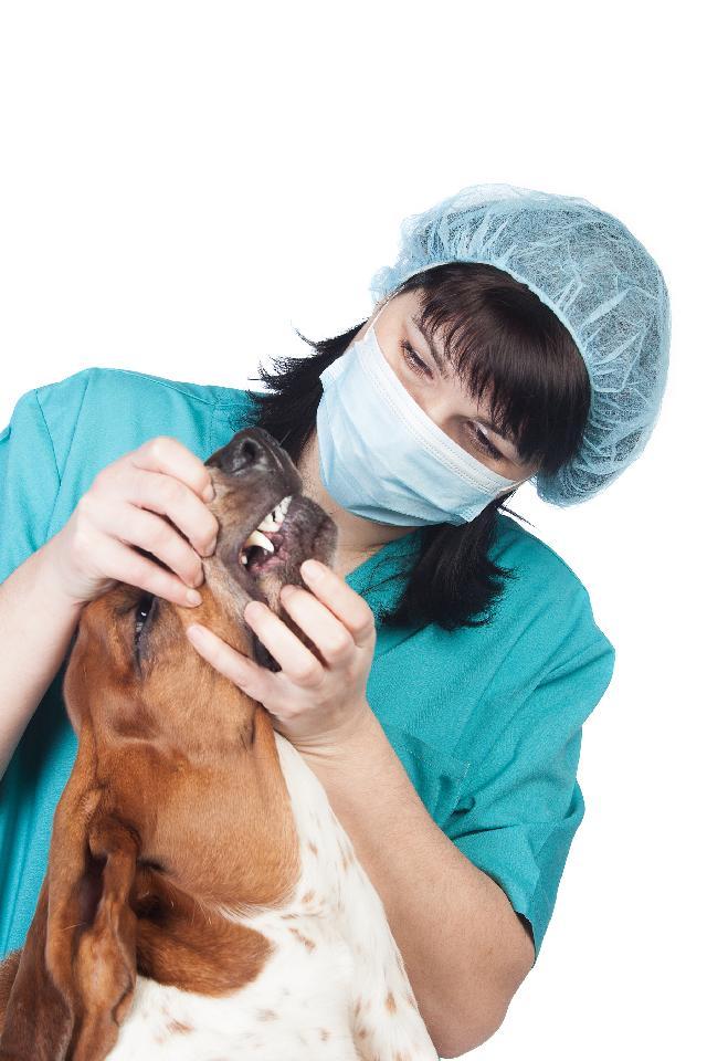 Dentista para Cães
