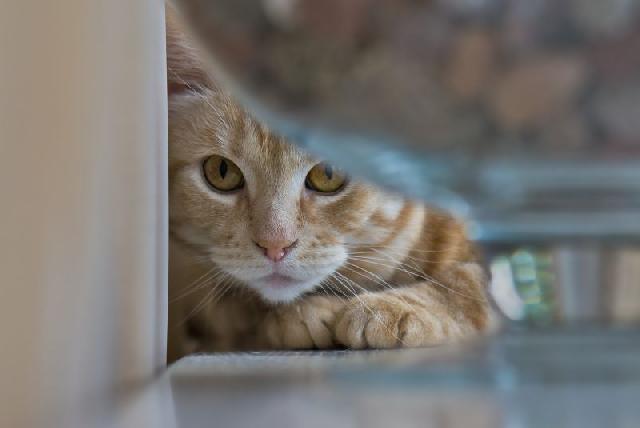 depressao-gatos