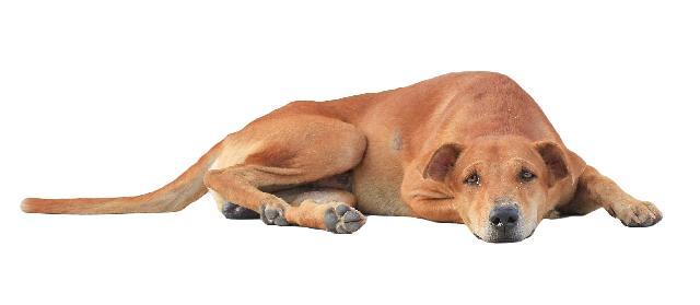 Doenças em Cachorros