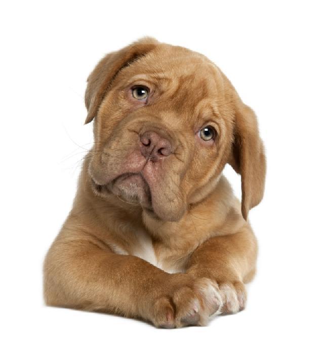 Atendimento emergencial veterinário