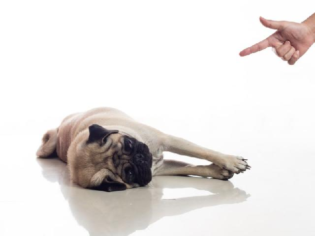 ensinar-truques-para-cachorros