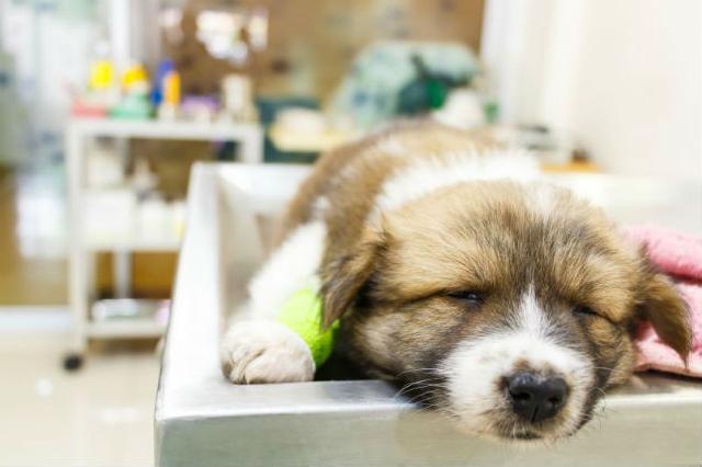 Equipamentos para clínicas e hospitais veterinários