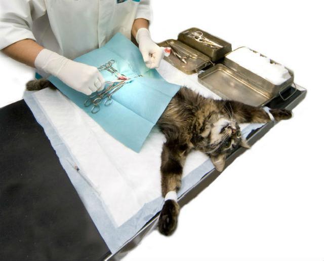 Equipamentos de uso veterinário