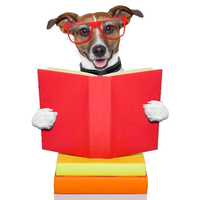 Escolas para cachorros