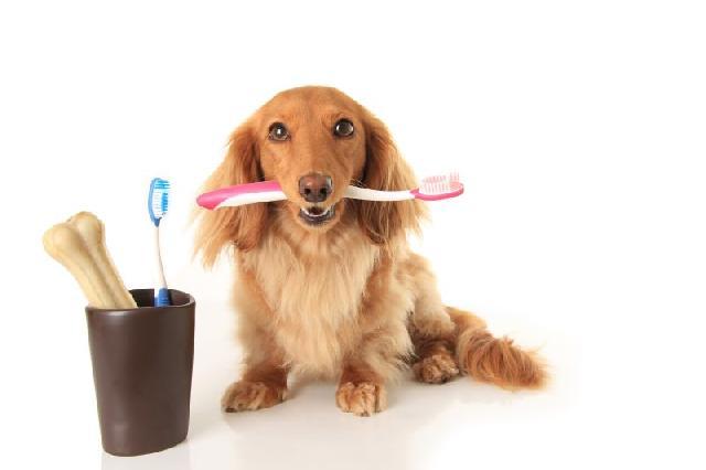 escovacao-dentes-cachorro