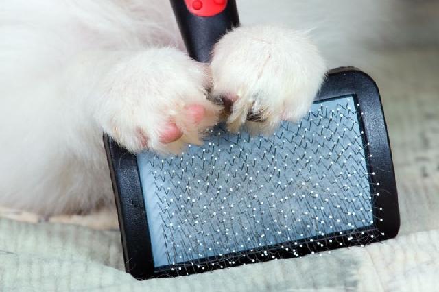 escovar-pelo-cachorro